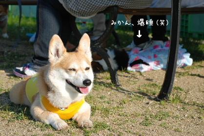 2010.6.9みかんちゃん&半蔵クンとwonworld0016