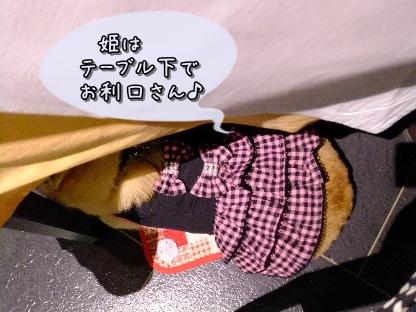 2010.11.6?7 旅行 Fine Pix撮影0060