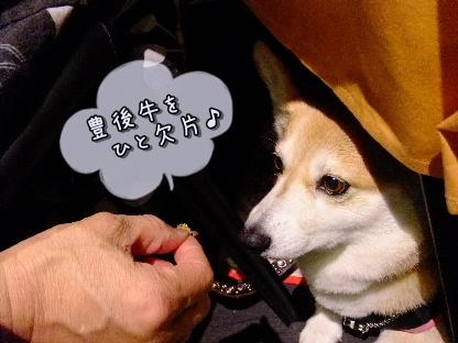 2010.11.6?7 旅行 Fine Pix撮影0061
