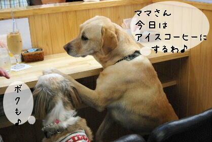 2010_0729(006).jpg