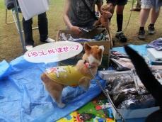 2011_0605(022).jpg