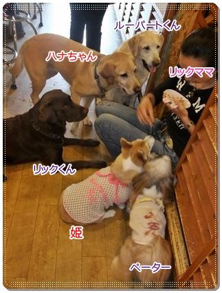 2011_0609.jpg