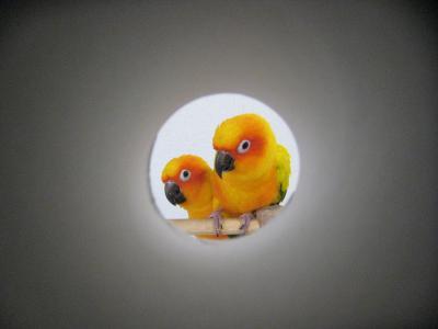 IMG_1581_convert_20120214162710.jpg