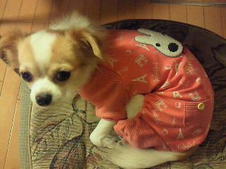 鈴 パジャマ