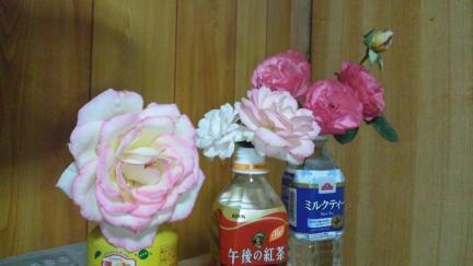 レオナルドダビンチ プリンセス モナコ アスピリン・ローズ 2011春バラ満開
