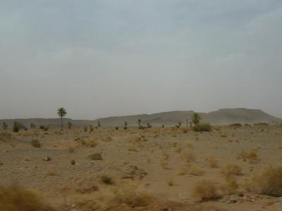 2泊3日砂漠ツアー(トドラ渓谷~メルズーガ)20