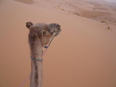 2泊3日砂漠ツアー(ラクダ乗りとテント宿泊)2