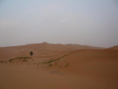 2泊3日砂漠ツアー(ラクダ乗りとテント宿泊)5