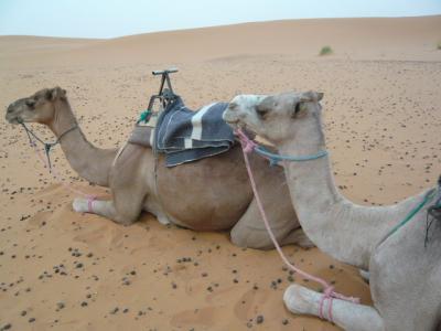 2泊3日砂漠ツアー(ラクダ乗りとテント宿泊)1
