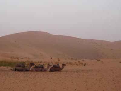 2泊3日砂漠ツアー(ラクダ乗りとテント宿泊)7