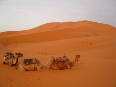 2泊3日砂漠ツアー(ラクダ乗りとテント宿泊)14