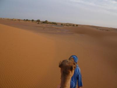 2泊3日砂漠ツアー(ラクダ乗りとテント宿泊)17