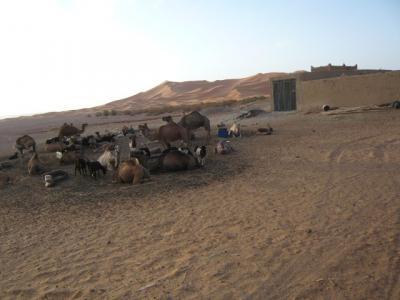 2泊3日砂漠ツアー(ラクダ乗りとテント宿泊)18