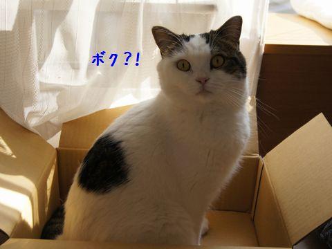 手のかかる子1号