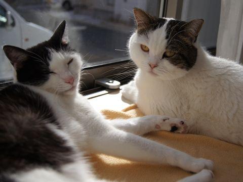 窓際で仲良くまったり