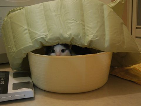 おこもり猫