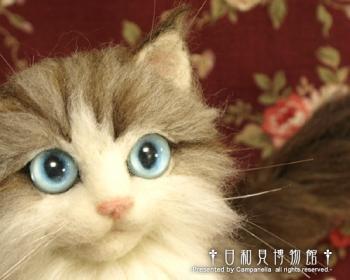 cat1001b.jpg