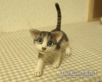 cat20100928b.jpg