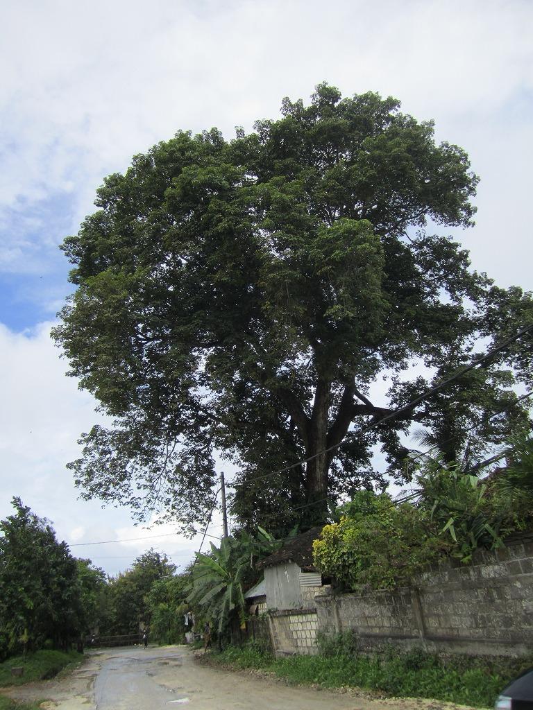 バリ4月7日 2011 057
