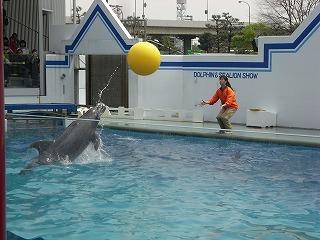 イルカのキャッチボール