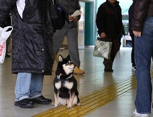 お見送り犬 (4)
