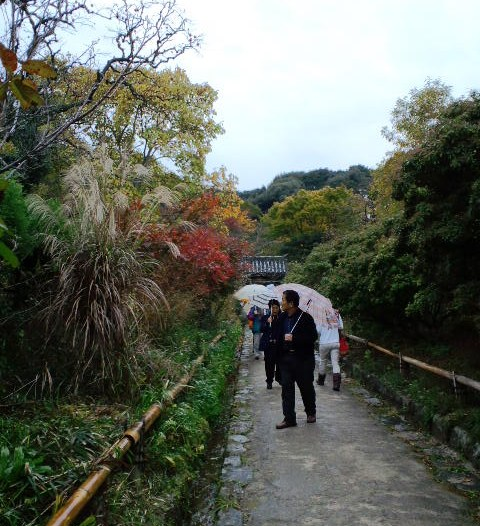 雨の浄瑠璃寺