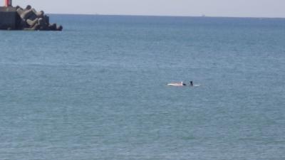 サーフィン8