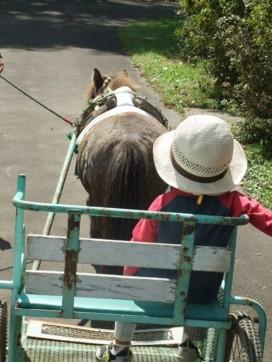馬にものったよ