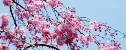 flower18-a.jpg
