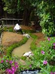 神宮様境内ホタルの流れ上陸地及び産卵苔
