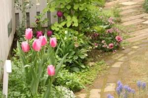 小さな庭の春
