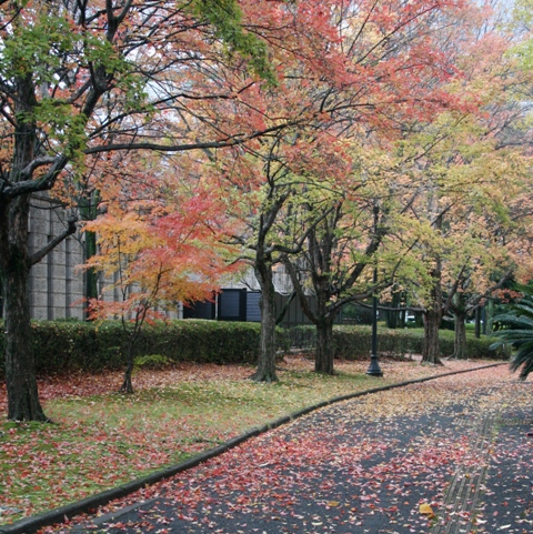 IMG_8378 図書館の森 紅葉 W