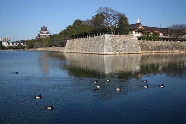IMG_8860 広島城お堀の水鳥 W