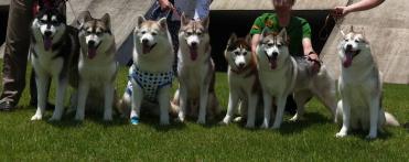 huskies.jpg