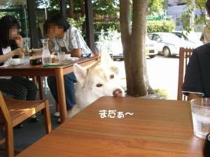 2009 10月愛ハス 002
