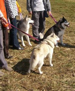 2009 10月ポールラッシュ祭 014