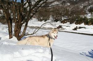2010 1月白川郷 193