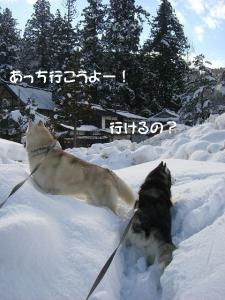 2010 1月白川郷 010