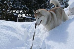 2010 1月白川郷 080