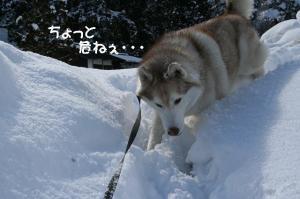 2010 1月白川郷 081