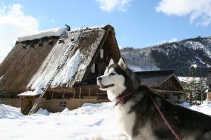 2010 1月白川郷 164