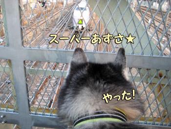 鉄犬ポトフ