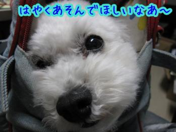 IMG_4294_20100720113422.jpg