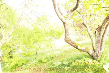 森の朝(勝浦)