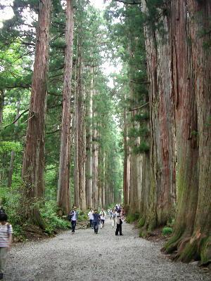 戸隠神社参道杉並木