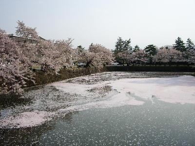 お堀の桜@上杉神社