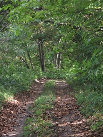 森トンネル