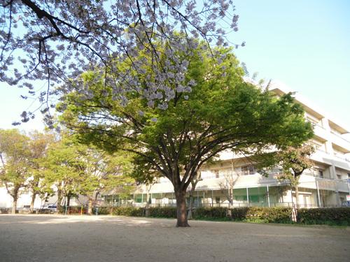 公園の木2