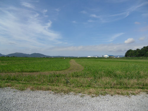 草がこんな。