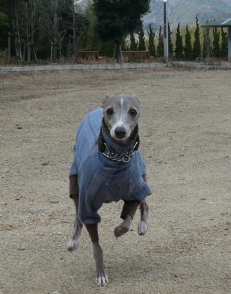 お庭だと走らないトトも、広ーい場所だとよく走ります